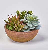 "6"" SUCCULENT PLANTS IN ROUND TERRA COTTA POT"
