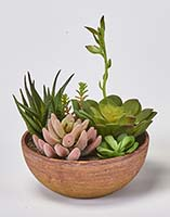 "8"" SUCCULENT PLANTS IN ROUND POT"