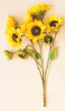 "23"" Sunflower Bush X 9 With 5"", 4"", 2"" Heads"