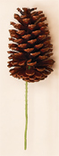 "5"" Lacquered Natural Pine Cone Pick"