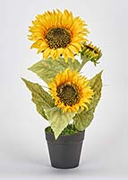 "14""  POTTED SUNFLOWER PLANT W/ 3 SUNFLOWER HEADS"