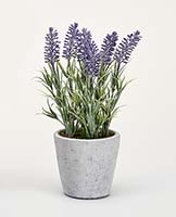 "10"" LAVENDER IN CERAMIC POT"