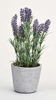 "13"" LAVENDER IN CERAMIC POT"