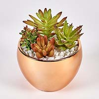 "SUCCULENTS IN 3.5"" DIAMETER GOLD CERAMIC POT"