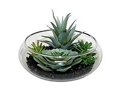 "MIXED SUCCULENTS ON BLACK STONES IN 7"" GLASS CONTAINER"