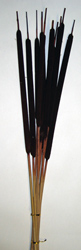 "30"" Large Cattail X 10, Dark Brown"