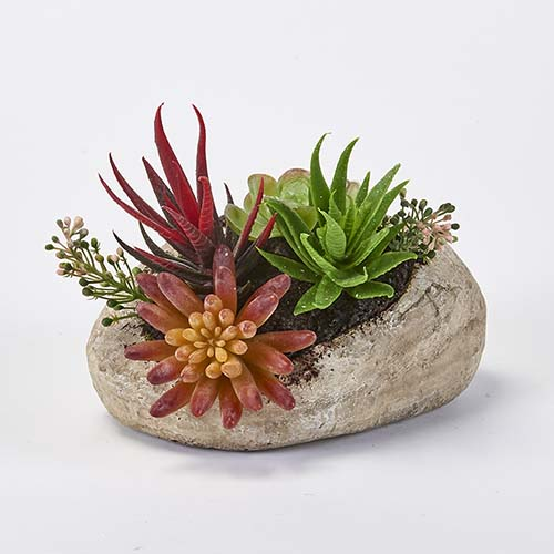 "6"" SUCCULENTS IN FAUX STONE CONTAINER POT"