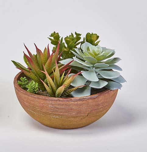 "6"" SUCCULENT PLANTS IN ROUND TERRA COTTA POT"