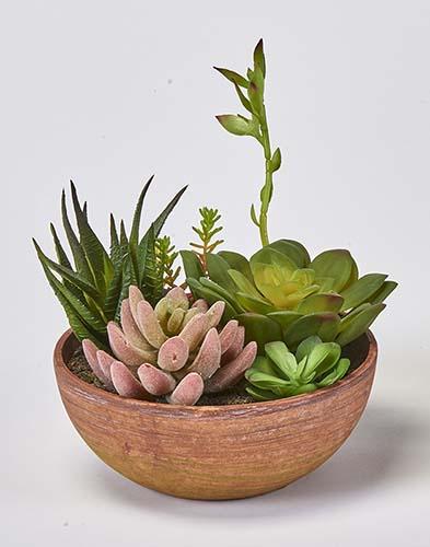 "8"" SUCCULENT PLANTS IN ROUND POT"