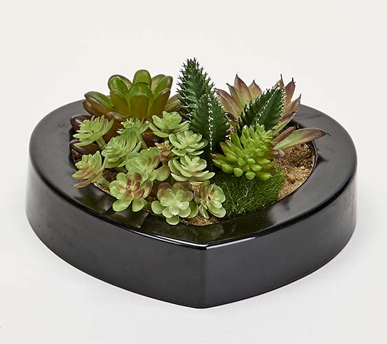 """MIXED SUCCULENTS IN 7"""" HEART SHAPED BLACK PLASTIC CONTAINER"""