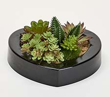 "MIXED SUCCULENTS IN 7"" HEART SHAPED BLACK PLASTIC CONTAINER"