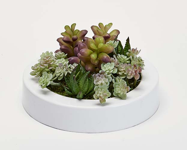 """MIXED SUCCULENTS IN 7"""" ROUND WHITE PLASTIC CONTAINER"""