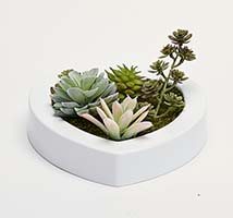 "MIXED SUCCULENTS IN 7"" HEART SHAPED WHITE PLASTIC CONTAINER"