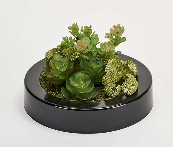 "MIXED SUCCULENTS IN 7"" ROUND BLACK PLASTIC CONTAINER"