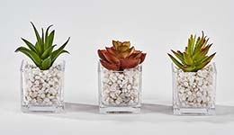 "SUCCULENT IN 2.25"" SQUARE GLASS CONTAINER"