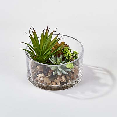 """SUCCULENTS IN 5.5"""" ROUND GLASS CONTAINER"""