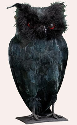 "11"" Standing Black Owl"