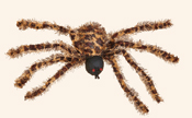 "22"" Spider w/ Red Lighted Flashing Eyes Shining"