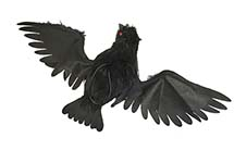 "20"" Hanging Open Wing Black Crow"